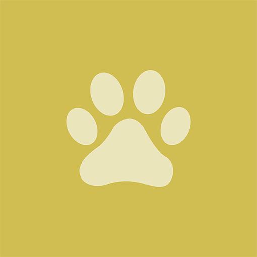 Pet Care Icon - web